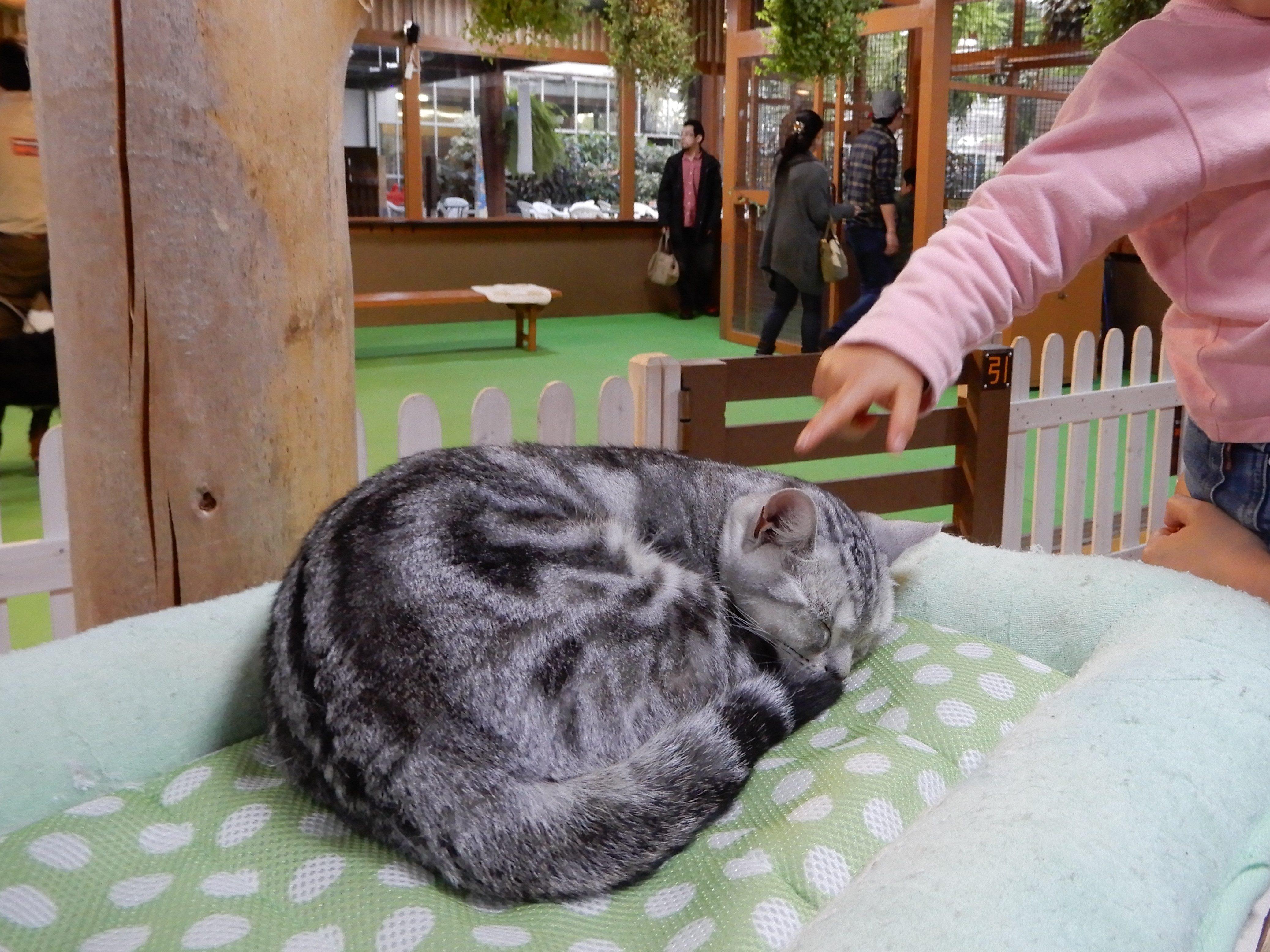 神戸どうぶつ王国 猫